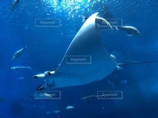 水面下を泳ぐ魚たちの写真・画像素材[1001993]