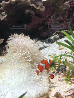 水面下を泳ぐ魚たちの写真・画像素材[1001994]