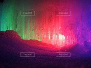 氷点下の森の写真・画像素材[979404]