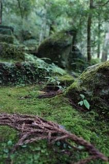 緑の写真・画像素材[2775581]