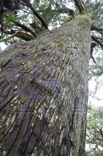大樹の写真・画像素材[2777888]