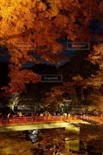 日本の秋の写真・画像素材[2777892]