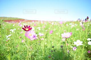 花の写真・画像素材[377885]