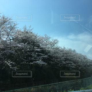 春の写真・画像素材[10798]