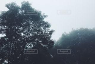 自然の写真・画像素材[241805]