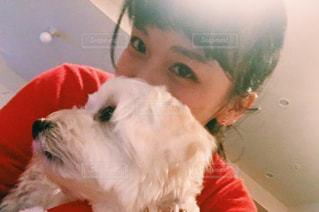 犬の写真・画像素材[328772]