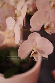 花の写真・画像素材[369956]