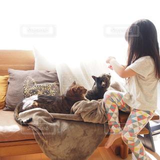 猫の写真・画像素材[370183]