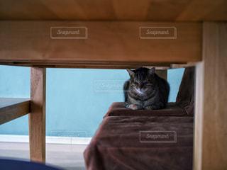 猫の写真・画像素材[411778]