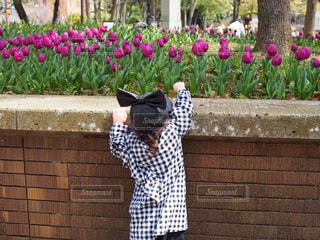 花の写真・画像素材[418217]