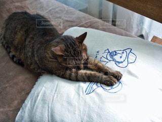 猫の写真・画像素材[563740]