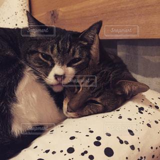 ベッドの上で横になっている猫の写真・画像素材[932937]