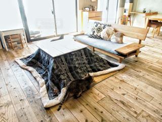 木製の床の上に横たわっている猫の写真・画像素材[2701775]