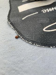 てんとう虫の写真・画像素材[2774807]