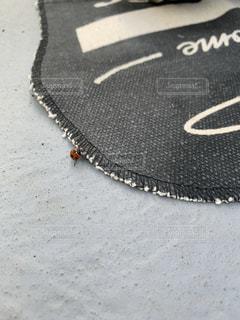 てんとう虫の写真・画像素材[2774812]