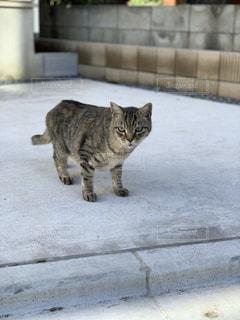 こっちみてる猫の写真・画像素材[2774813]