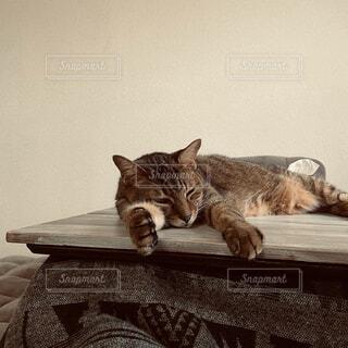 コタツの上の猫の写真・画像素材[4217644]