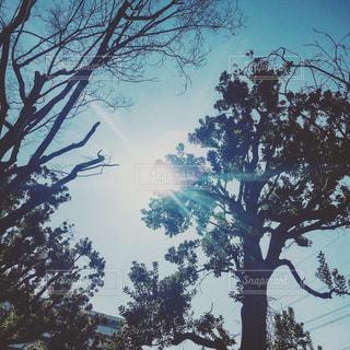 空の写真・画像素材[371326]