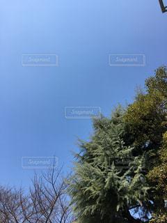 空の写真・画像素材[381145]