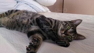 猫の写真・画像素材[370414]