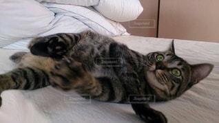 猫の写真・画像素材[370415]
