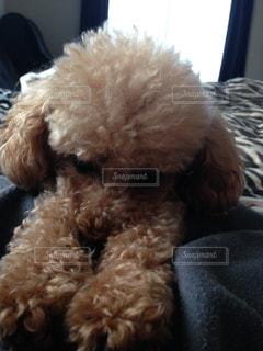 犬の写真・画像素材[383820]