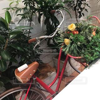春,サイクリング