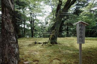 日本庭園の写真・画像素材[1019744]