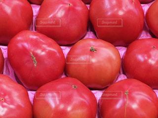 トマトの写真・画像素材[384313]
