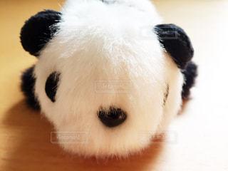 パンダのぬいぐるみの写真・画像素材[1057909]
