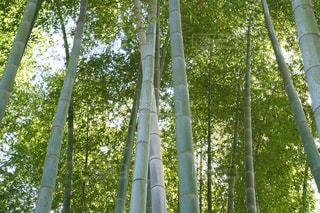 竹林 和のイメージの写真・画像素材[1145183]