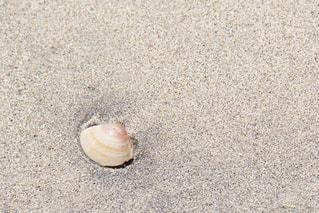 砂浜の貝殻の写真・画像素材[1240827]
