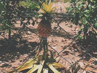フルーツの写真・画像素材[371018]