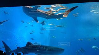 魚 - No.373832