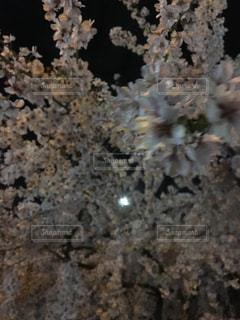 No.426710 春