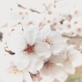 春 - No.383813