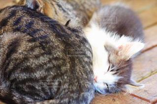 猫の写真・画像素材[385330]