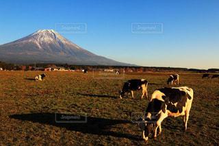 風景の写真・画像素材[385332]