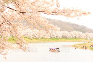 春 - No.385904