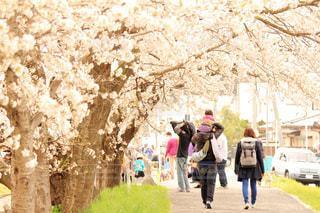 春 - No.385906