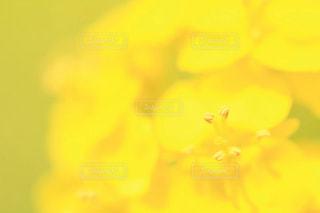 自然 - No.392929