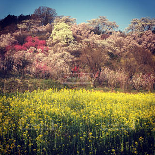 花は緑豊かな緑のフィールドに立っています。 - No.892989