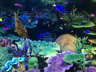 魚の写真・画像素材[371414]