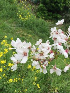 春 - No.373268