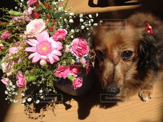 犬の写真・画像素材[373299]