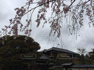 春の写真・画像素材[385154]