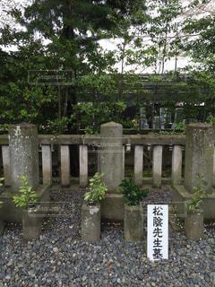No.385165 桜