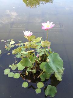 花の写真・画像素材[385258]