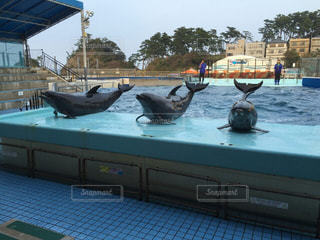 イルカの写真・画像素材[371798]