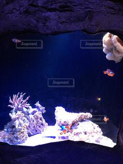 魚の写真・画像素材[371832]